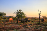 Rhino Herd Moving around at Sunset Photographic Print by JMx Images