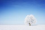 Winter Tree in a Field with Blue Sky Photographic Print by Dudarev Mikhail