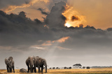 African Sunset with Elephants Photographic Print by Oleg Znamenskiy