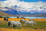 Beautiful White and Gray Horses Grazing in a Meadow near the Lake. on the Horizon, Towering Cliffs Photographic Print by  kavram