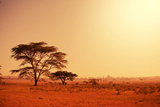 Quiver Tree in Namibia, Africa Photographic Print by Galyna Andrushko