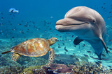 Dolphin and Turtle Underwater on Reef Background Looking at You Photographic Print by Andrea Izzotti