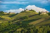 Vineyards of Langhe, Piedmont, UNESCO World Heritage Photographic Print by  javarman