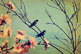 Vintage Spring Image with Swallows and Tree Blossom.Textured Old Paper Background with Conceptual N Photographic Print by Protasov AN