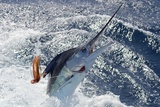 New Zealand Striped Marlin Photographic Print by  swordfishmike