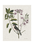 Studies in Nature I Posters por Mark Catesby
