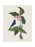 Studies in Nature III Posters por Mark Catesby