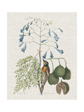 Studies in Nature II Poster por Mark Catesby