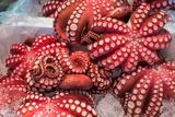 Red Live Octopus at Tsukiji Fish Market, Tokyo, Japan Photographic Print by  javarman