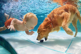 Funny Little Child Play with Fun and Train Golden Labrador Retriever Puppy in Swimming Pool, Jump A Photographic Print by Tropical studio