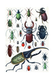 Insects, Beetles and Scarab, Vintage Engraved Illustration. La Vie Dans La Nature, 1890. Photographic Print by Morphart Creation