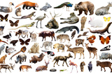 Set of Various Asian Isolated Wild Animals including Birds, Mammals, Reptiles and Insects Photographic Print by Iakov Filimonov