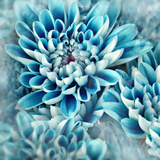 Photo Illustration of Abstract Flower Petals in Blue Photographic Print by Annmarie Young