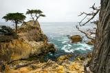 Rocky Cliff and Trees in Carmel near Pebble Beach. Carmel, California, Usa. Photographic Print by Lynn Y