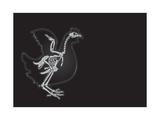 X-Ray Vector Chicken Photographic Print by  anton_novik