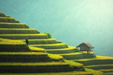 Vietnam Rice Fields on Terraced of Mu Cang Chai, Yenbai, Vietnam. Rice Fields Prepare the Harvest A Photographic Print by  SasinTipchai