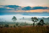 Sunrise in Savanah Meadow Photographic Print by  Joney