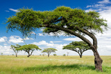 Green Trees in Africa, after the Rainy Season. / African Landscape. Photographic Print by  shuttJD