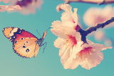 Vintage Spring Image with Butterfly and Blossoming Fruit Tree against Blue Sky. Springtime Nature A Photographic Print by Protasov AN