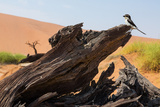 The Desert Landscape Photographic Print by  StanislavBeloglazov