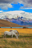 The Landscape in the National Park Torres Del Paine, Chile. Lake Laguna Azul in the Mountains. on T Photographic Print by  kavram