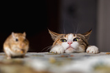 Cat Playing with Little Gerbil Mouse on the Table Photographic Print by Sergey Zaykov