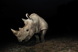 White Rhinoceros Photographic Print by Signature Message