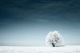 Alone Frozen Tree in Snowy Field and Dark Blue Sky Photographic Print by Dudarev Mikhail