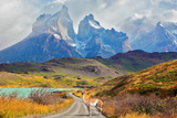 Majestic Peaks of Los Kuernos over Lake Pehoe. on a Dirt Road is worth Guanaco - Lama. the National Photographic Print by  kavram