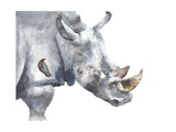 Rhinoceros Safari African Animal Watercolor Painting Illustration Isolated on White Background Photographic Print by Yulia She