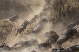 Wildebeests Mara Crossing Photographic Print by Alexey Osokin