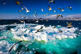 Drift Ice Photographic Print by Kei Shooting