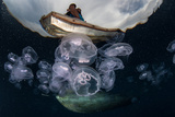 Moon Jellyfish (Aurelia Aurita) Aggregate in an Ocean Gyre in Eastern Indonesia. this Species of Je Photographic Print by Ethan Daniels