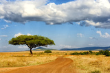 Beautiful Landscape with Tree in Africa Photographic Print by Volodymyr Burdiak