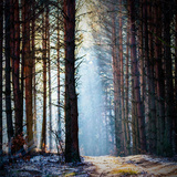 Sunlight in the Grey Forest, Nature Series Photographic Print by  TSpider
