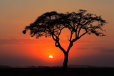 Sunset with Silhouetted African Acacia Tree, Amboseli National Park, Kenya Photographic Print by  EcoPrint