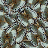Exotic Grey and Pale Green Background Made of Cambodian Junglequeen Butterflies in the Greatest Des Photographic Print by Super Prin
