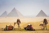 Camels with Pyramid Photographic Print by  peach018