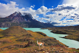 Early Autumn in Patagonia. National Park Torres Del Paine. on the Yellowed Grass Stands Guanaco - L Photographic Print by  kavram