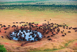 Herd of Buffaloes in Water Hole Photographic Print by Andrzej Kubik