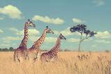 Group Giraffe in National Park of Kenya, Africa Photographic Print by Volodymyr Burdiak