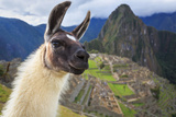 Machu Picchu, Peru, UNESCO World Heritage Site. One of the New Seven Wonders of the World Photographic Print by  sunsinger