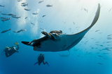 Manta and Diver on the Blue Background Photographic Print by Krzysztof Odziomek