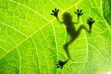 Frog Shadow on the Leaf Photographic Print by Patryk Kosmider