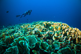 Scuba Diving above Coral below Boat Bunaken Sulawesi Indonesia Underwater Photo Photographic Print by  fenkieandreas