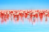 Flamingo Birds in the Lake Nakuru, African Safari, Kenya Photographic Print by Anna Om