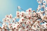 Spring Flowers./ Spring Flowers Photographic Print by Aleksandar Grozdanovski