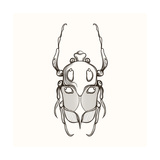 Hand Drawn Engraving Sketch Scarab Beetle, May Bug, European Diving Beetle. Vector Illustration For Photographic Print by  panki