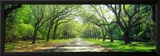 Live Oaks and Spanish Moss Wormsloe State Historic Site Savannah Ga Framed Photographic Print