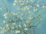 Almond Blossoms, 1890 Pôsters por Vincent van Gogh
